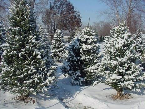 Hemsby's Christmas Secrets